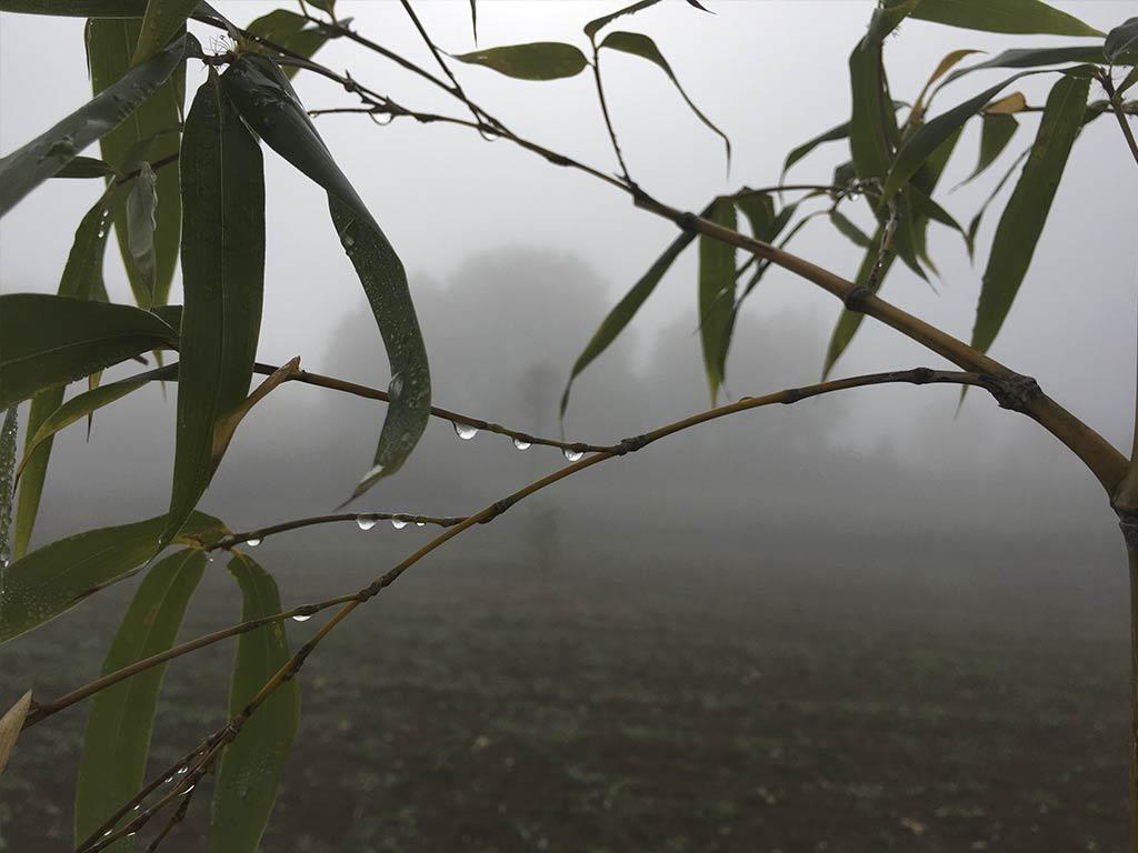 Bamboo Podere Conte Ràcani